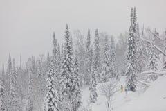 Wintersturm in einem Wald Stockbild