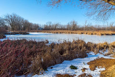 Wintersumpf Lizenzfreies Stockfoto