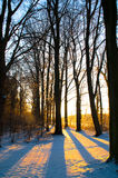 Wintersun Stockbild