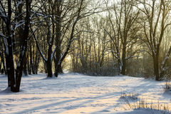 Wintersun Imagens de Stock Royalty Free