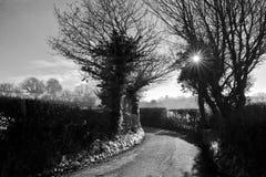 Wintersun braking through branches - black and white Royalty Free Stock Photo