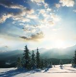 Winterszene Stockfotografie
