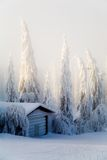 Winterszene Stockbilder