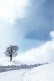 Winterszene Stockfoto