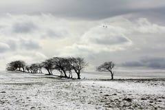 Winterszene Stockbild