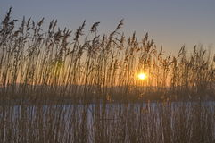 Winterszene in den Niederlanden Lizenzfreie Stockfotografie