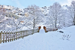 Winterszene der Holzbrücke in Gourette-Dorf Lizenzfreie Stockfotos