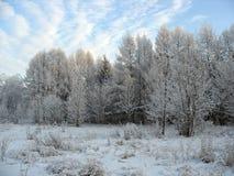 Winterszene. Eisige Bäume stockbild