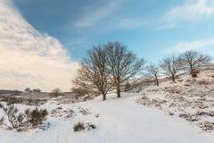Winterszene im holländischen Nationalpark Veluwe stockfoto