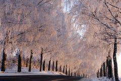 Winterszene mit Bäumen stockfotos