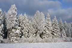 Winterszene mit Bäumen lizenzfreies stockfoto