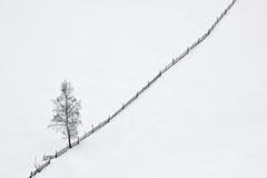 Winterszene mit Baum und hölzernem Zaun Stockfotos