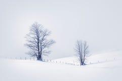 Winterszene mit einsamen Bäumen Stockbild