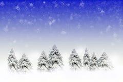 Winterszene mit schneebedeckten Kiefern Lizenzfreies Stockfoto