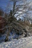 Winterszene mit Straße und bunten Blendenflecken Lizenzfreies Stockfoto