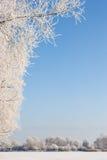 Winterszene umfaßt mit Schnee Lizenzfreies Stockbild