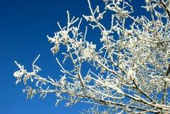 Wintertag. Lizenzfreie Stockfotografie