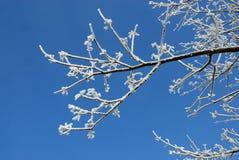 Wintertag. Stockbilder