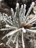 Wintertag im Holz lizenzfreie stockbilder