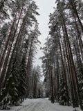 Wintertag im Wald Stockfoto