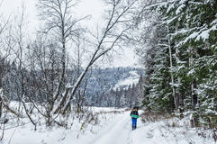 Wintertag im Wald Stockbild