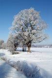 Wintertag, schöner Hoarfrost und Raureif auf Bäumen Lizenzfreies Stockfoto