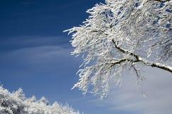 Wintertag und -baum Lizenzfreies Stockfoto
