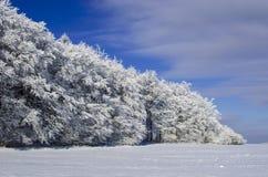 Wintertag und -wald Lizenzfreies Stockfoto