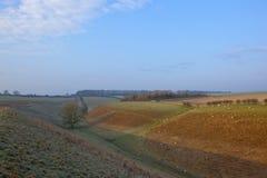 Wintertal mit Schafen Lizenzfreie Stockfotos