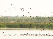Wintertaling, het vliegen en spel in het water royalty-vrije stock foto's