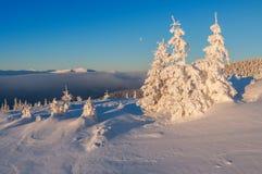 Wintertannen im Berg Lizenzfreie Stockbilder