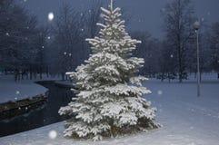 Wintertannenbaum Lizenzfreie Stockbilder