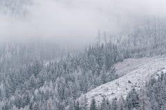Wintertapete, Kiefer bedeckt mit Schnee lizenzfreie stockfotos