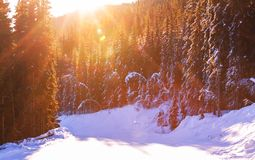 Wintertijd Stock Afbeelding