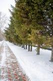 Wintertijd met pijnboom en sneeuw Royalty-vrije Stock Afbeelding