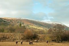 Wintertijd voor een kudde van paarden Royalty-vrije Stock Foto's
