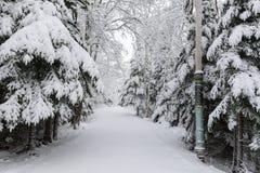 Wintertime в Новой Шотландии стоковые фото