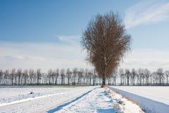 wintertime Нидерландов сельскохозяйствення угодье Стоковое фото RF