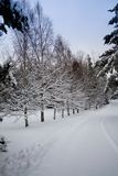 Wintertime. Row of snowcovered trees and road Royalty Free Stock Photography