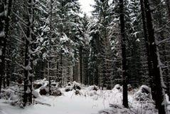Wintertime Imagens de Stock Royalty Free