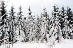 Wintertime Imagens de Stock
