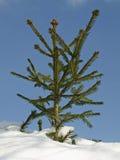 wintertime Royaltyfria Bilder