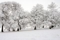 Wintertime Royalty Free Stock Photos