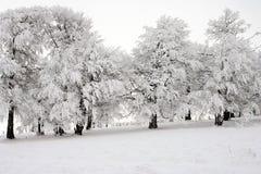 wintertime Zdjęcia Royalty Free