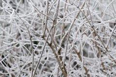wintertime Στοκ φωτογραφίες με δικαίωμα ελεύθερης χρήσης