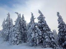 wintertime Стоковое Фото