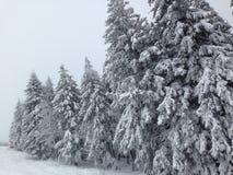 wintertime Стоковые Фото