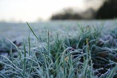 Wintertime fotos de stock