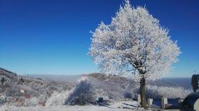 wintertime Arkivfoton