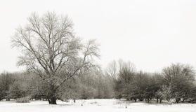 Wintertime fotografia de stock